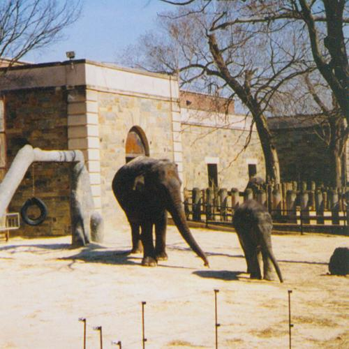 Elephants, National Zoo, March 2004