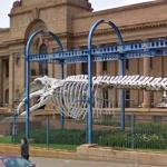 Whale skeleton outside the Transvaal Museum