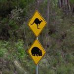 Kangaroo and Wombat Crossing