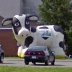 Inflated cow display