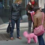 Have you ever seen pink dog!!!