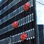 Giant Ladybugs