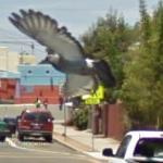 Google Bird View
